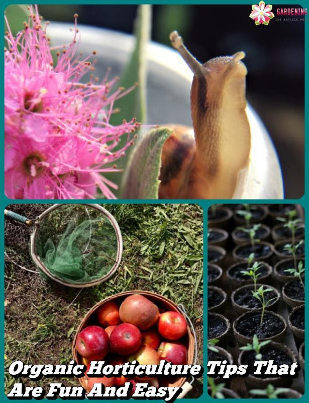 Organic Horticulture Tips That Are Fun And Easy