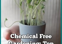 Chemical Free Gardening: Top Tips For An Organic Garden
