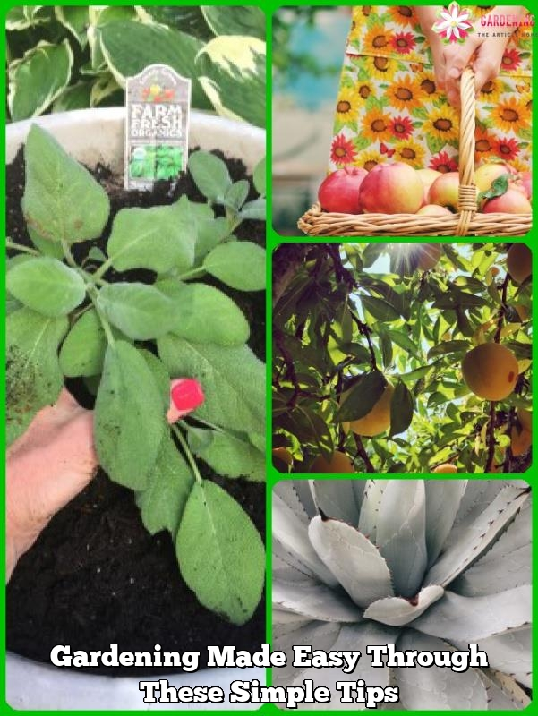 gardening made easy through these simple tips