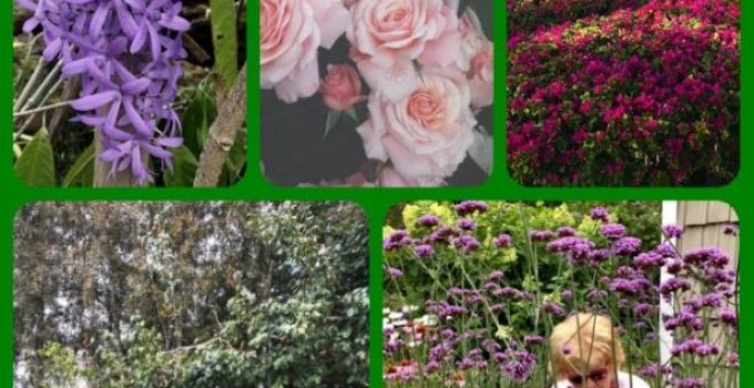 Best Tips For The Most Beautiful Garden