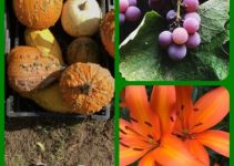 Create A First Class Garden When You Use These Ideas