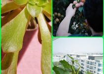 Garden Doldrums? This Advice Will Perk It Right Up!