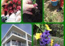 Gardeners Delight!  Useful Tips To A Beautiful Garden!