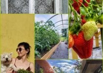 Have Fun With Horticulture By Using These Tips