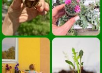 Horticulture Tips For Gardeners Of All Levels