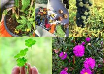 How To Grow An Organic Garden Like A Pro
