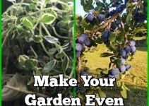 Make Your Garden Even Greener With These Tips