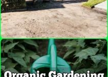 Organic Gardening Tips For Gardeners Of Any Level