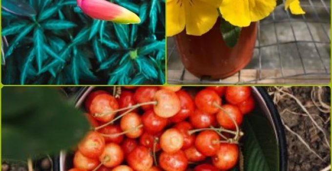 Stuck With Your Organic Garden? Use These Tips To Find Your Way!