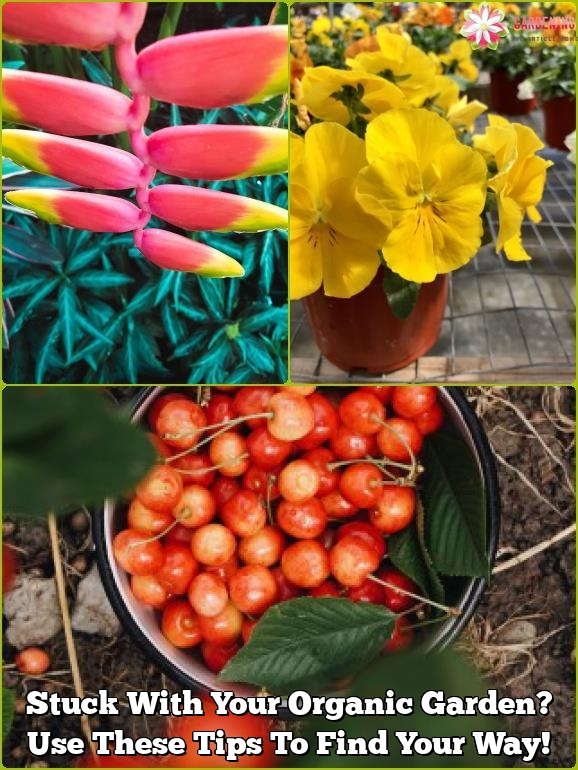stuck with your organic garden use these tips to find your way