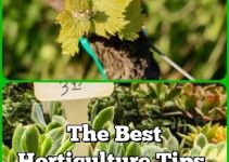 The Best Horticulture Tips, Tricks And Pointers