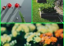 Tips And Tricks On How To Achieve A Good Organic Garden