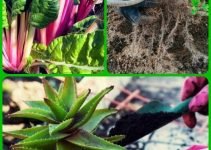 Tips And Tricks On Keeping The Pests Out Of The Garden