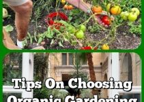 Tips On Choosing Organic Gardening For A Healthier Lifestyle