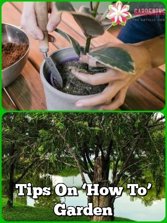tips on how to garden