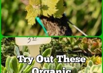 Try Out These Organic Horticulture Tips Today!