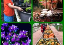 A Healthy Start: How To Grow An Organic Garden