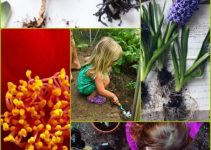 Create The Garden Of Your Dreams With This Useful Information.