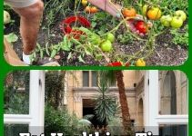 Eat Healthier: Tips For Organic Horticulture