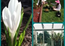 Flower Horticulture And How You Can Make Your Yard Look Lovely