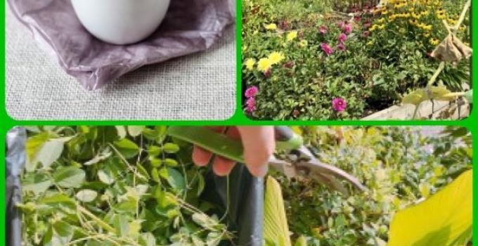 Great Ideas For Growing Your Own Organic Garden
