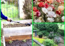 Handy Advice For Getting The Garden Of Your Dreams