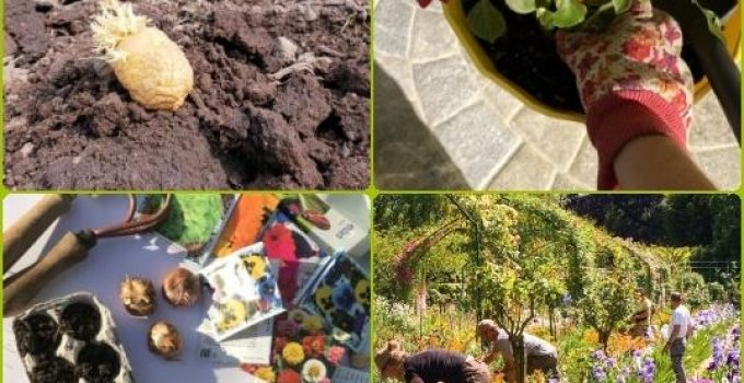 Horticulture Tips For New And Advanced Gardeners