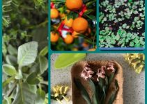 How To Grow A Kitchen Garden Full Of Fresh Herbs And Veggies