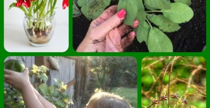 Ideas To Try In Your Organic Garden
