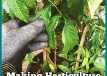 Making Horticulture Easy For Just About Anyone
