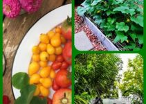 Need Advice On Organic Horticulture? Look No Further Than This Article!