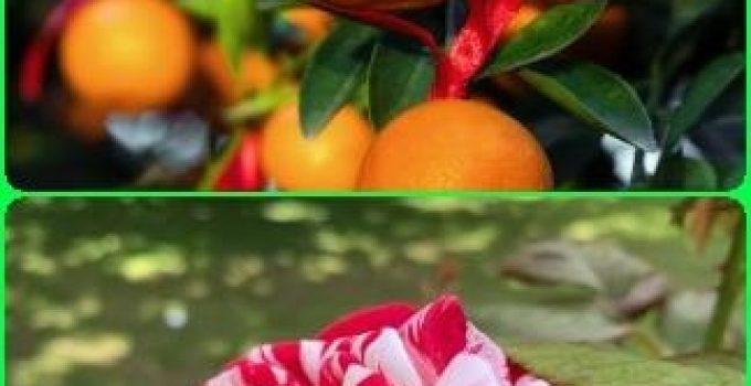 The Basics Of How To Grow An Organic Garden