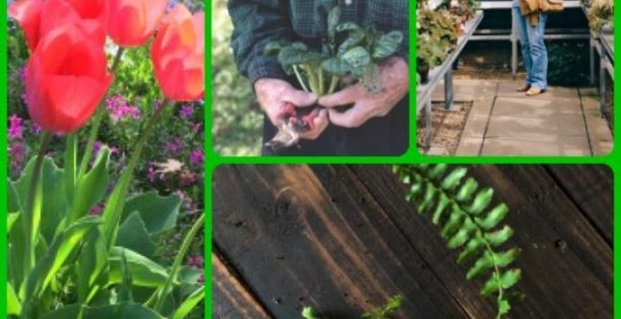 The Best Information About Gardening That Exists