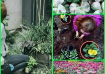 Things That You Need To Know When It Comes To Organic Horticulture