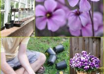 Tips, Tricks, And Advice For A Thriving Garden