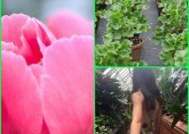 To Your Health: Helpful Organic Gardening Advice