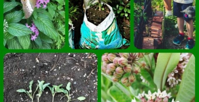 What You Can Do To Improve Your Organic Horticulture