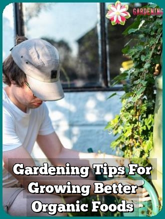 gardening tips for growing better organic foods