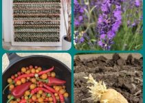Getting The Most From A Vibrant Organic Garden