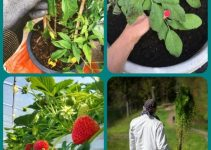 How To Grow A Garden With Minimal Space
