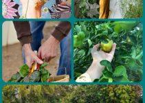 Making Your Garden A Family Fun Activity