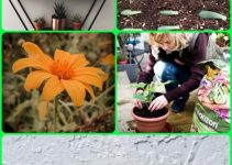 Secrets To A Healthy And Plentiful Garden