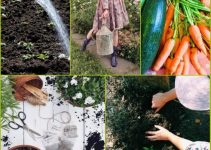 Simple Organic Horticulture Tips That Anyone Can Try