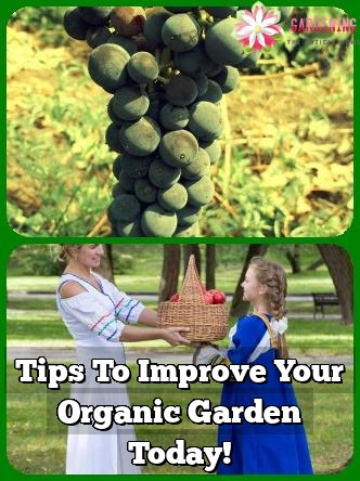 tips to improve your organic garden today