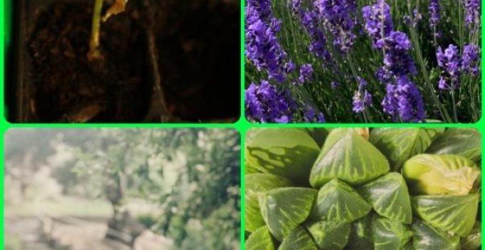 Growing An Organic Garden: Tips And Tricks