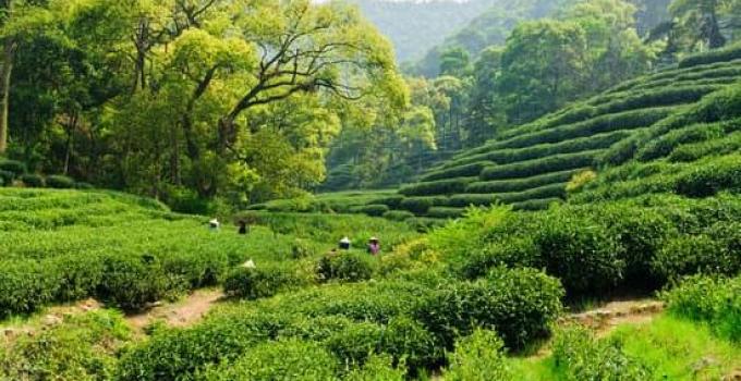 Eco-Friendly Gardening Ideas for Your Home Garden