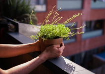 Gardening – Learning How to Gardening With Ease
