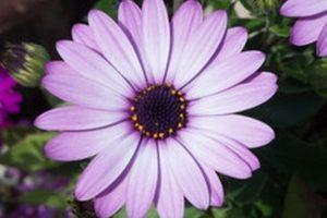 Garden Decor Ideas For Creative Gardening
