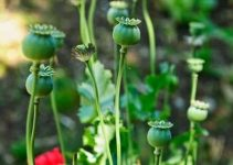 How To Make Garden Pans And Soils: The Importance Of Mulching In Your Vegetable Garden