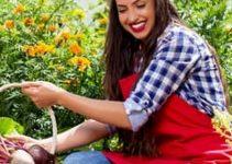 Tips on Beautiful Garden Design